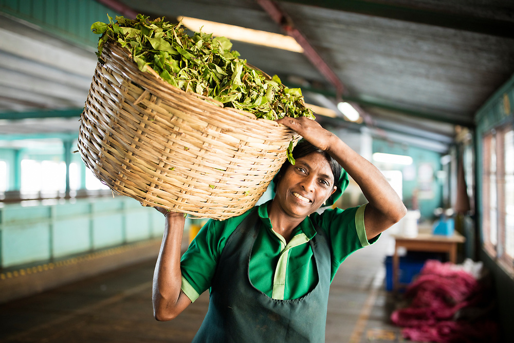 Glenloch Tea Estate, Rambola, Sri Lanka