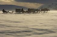 Reindeer (Rangifer tarandus), Övre Soppero, Lapland, Norrbotten, Sweden. Sledding safari tour with saami tour operator Min Ealin.