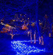 Blue lights simulate water flowing down a hill at the Way of Lights holiday light display at the National Shrine of Our Lady of the Snows in Belleville on December 3, 2019. This is the 50th anniversary of the annual light display, which runs from 5 pm to 9 pm through December 31.<br />Photo by Tim Vizer