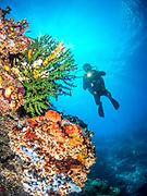 Scuba diving on the reefs of Tufi Resort in Papua New Guinea.