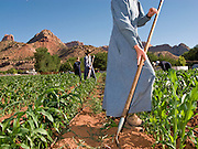 "June 16, 2008 -- COLORADO CITY, AZ: Members of the Jessop family, a polygamous family and members of the FLDS in Colorado City, AZ, weed the community corn field. The family grows about 30 percent of the food they consume and buy the rest at the town mercantile store. Colorado City and neighboring town of Hildale, UT, are home to the Fundamentalist Church of Jesus Christ of Latter Day Saints (FLDS) which split from the mainstream Church of Jesus Christ of Latter Day Saints (Mormons) after the Mormons banned plural marriage (polygamy) in 1890 so that Utah could gain statehood into the United States. The FLDS Prophet (leader), Warren Jeffs, has been convicted in Utah of ""rape as an accomplice"" for arranging the marriage of teenage girl to her cousin and is currently on trial for similar, those less serious, charges in Arizona. After Texas child protection authorities raided the Yearning for Zion Ranch, (the FLDS compound in Eldorado, TX) many members of the FLDS community in Colorado City/Hildale fear either Arizona or Utah authorities could raid their homes in the same way. Older members of the community still remember the Short Creek Raid of 1953 when Arizona authorities using National Guard troops, raided the community, arresting the men and placing women and children in ""protective"" custody. After two years in foster care, the women and children returned to their homes. After the raid, the FLDS Church eliminated any connection to the ""Short Creek raid"" by renaming their town Colorado City in Arizona and Hildale in Utah. A member of the Jessop family weeds the community corn plot in Colorado City, AZ. The Jessops are a polygamous family and members of the FLDS.   Photo by Jack Kurtz"