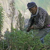 Cordillera Vilcabamba, Andes Mountains, Peru. A local laborer clears brush to expose archaeological sites on Cerro Victoria for a National Geographic expedition.