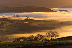 © Licensed to London News Pictures. 26/11/2020.  Builth Wells, Powys, Wales, UK. Many valleys in Powys, Wales, UK. are shrouded in cloud all day after temperatures dropped to freezing last night. Photo credit: Graham M. Lawrence/LNP
