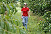 Sherry Chase of Mills Apple Farms walks amid rows of Harmony peach trees. The peaches are huge this year, largely due to the high rainfalls they've experienced at the Madison County-based orchard near Marine.