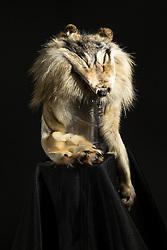 Adaka Cultural Festival 2016, Whitehorse, Yukon, Canada, Yukon First Nation Culture and Tourism Association, Kwanlin Dun Cultural Centre, Bunny Bruton, fur wolf face hat