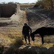 Nov 26, 2007 - Zhari-Panjwai District, Kandahar, Afghanistan - A soldier from the Afghan National Army (ANA) pets an abandoned horse on the front lines in the Howz-E-Madad area during a break in fighting with Taliban insurgents in a joint operation with Canadian Forces in the Zhari District of Afghanistan which along with nearby Panjwai are the most volatile areas in the country and the scene of heavy fighting with Taliban insurgents, which has become the site of the largest land battles in NATO's history..The Canadian Press Images/Louie Palu.