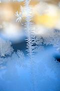 Winter Frost on Glass Window
