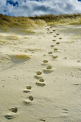 Footsteps on the sand dunes on the beach at Ardroil, Isle of Lewis, Outer Hebrides, Scotland<br /> <br /> (c) Andrew Wilson | Edinburgh Elite media