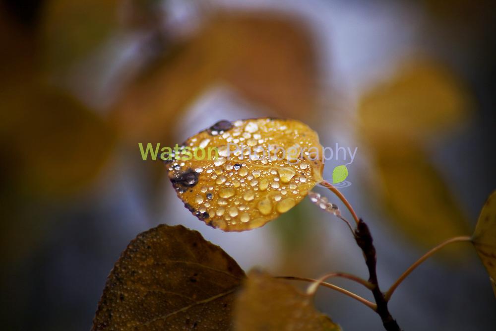 Dew Drop Beauty