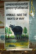 View of warning sign concerning animal rights, Tadoba National Park, India