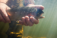 ANGLER HOLDING A RAINBOW TROUT UNDERWATER
