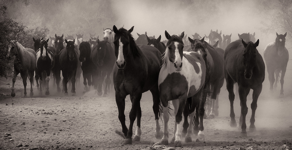 NEW Works by Craig W. Cutler Photography / DesignLIFE. <br /> <br /> Drama and Beauty, both artistically conveyed in this highly-limited Equestrian edition of Fine Art artworks.  Shot with Canon & Leica bodies and lenses, these are Craig Cutler's latest American West artworks.