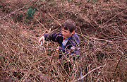 AE2CG2 Young boy cutting brambles in overgrown garden