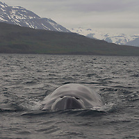 Iceland Gallaries