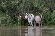 Wildlife photography from Arizona