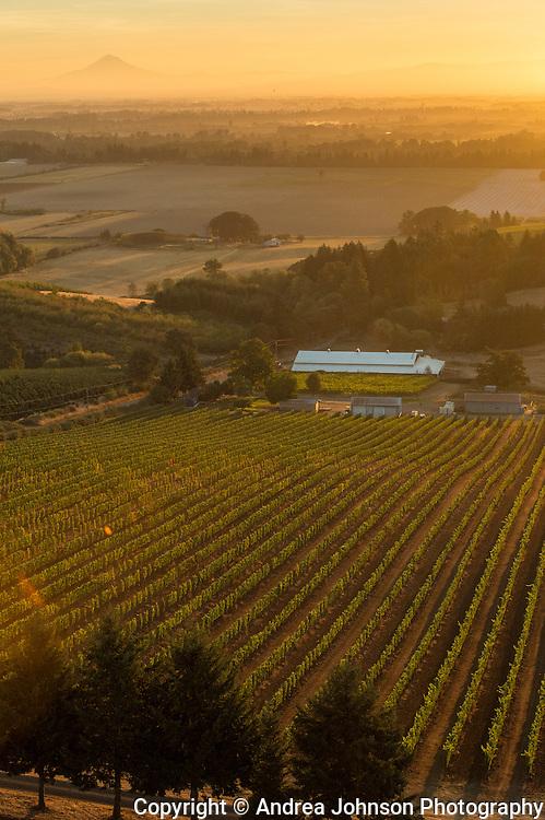 Aerial view over Evening Land's Seven Spring Vneyards, Eola Hills AVA, Willamette Valley, Oregon