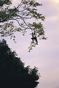 White-bellied Spider Monkey<br />Ateles belzebuth<br />Manu National Park, PERU   South America<br />(mother and baby)