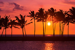 Kuualii fishpond, silhouette of coconut palms, Cocos nucifera, Anaehoomalu Beach, Anaehoomalu Bay, at sunset, Waikoloa, Big Island, Hawaii, USA, Pacific Ocean