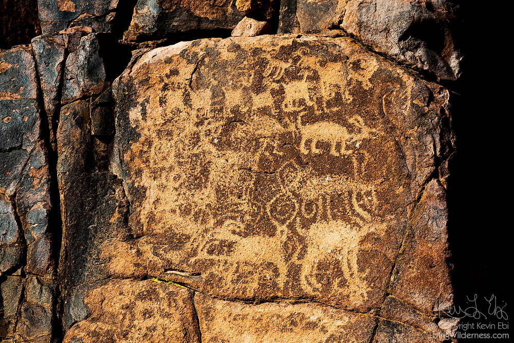 Faded petroglyphs depicting wildlife are visible on a basalt rock wall in Hieroglyphic Canyon, located in the Superstition Wilderness in Arizona. The petroglyphs were carved by the Hohokam people who lived in central and southern Arizona as early as 500 A.D.