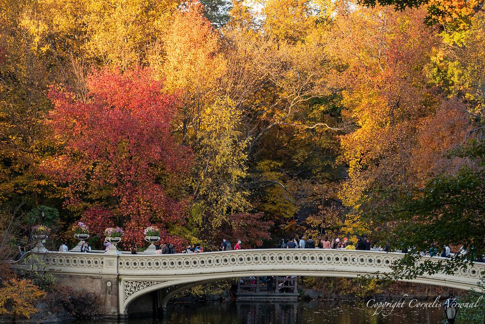 Autumn colors at Bow Bridge in Central Park
