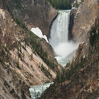 The Yellowstone River plunges over Lower Yellowstone Falls into the Grand Canyon of the Yellowstone.  This is the longest free-flowing river in North America.