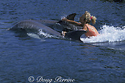 bottlenose dolphins, Tursiops truncatus, tow tourist in swim with dolphins program at at Theater of the Sea, Islamorada, Florida Keys, USA