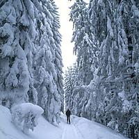 Ulrich Geertz  cross country skis in the Carpathian Mountains near Zarnesti. (Transylvanian Alps)