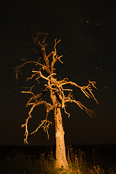 Stars over dead tree, Hill Country between Blanco and Fredericksburg, Texas, USA