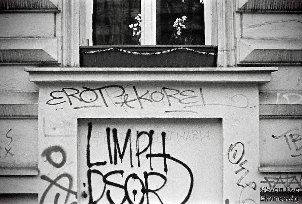 Berlin februar 2012. To hvite blomster i en blomsterkasse ved en nedtagget bygning i Berlin.<br /> Foto: Svein Ove Ekornesvåg