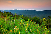 Summer wildflowers bloom on a ridge that overlooks Cheaha State Park, the highest point in the state of Alabama. The ridge is part of the Talladega National Forest.