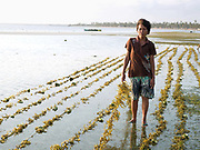 Gloria Mandawe (56) seaweed farmer, Tamiao, Bantayan Island, The Philippines.  Gloria starts work at 5 am to remove the algae from the seaweed by hand so that it will grow faster. Seaweed is fast growing and can be harvested in 1-2 months. The seaweed is then dried and sold to local buyers and a commercial processing plant in Cebu, where it is turned into powder; a high value product used by many industries including cosmetics and food. Before Typhoon Haiyan, Bantayan Island was the largest seaweed producer in Cebu province. The typhoon destroyed seaweed farms leaving over 2000 farmers without essential equipment and seedlings. Oxfam awarded cash grants to around 700 families to finance the purchase of seaweed seedlings and farming equipment including ropes, poles and floaters.
