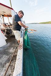 Leroy Gilbert Changing Nets For  Harvesting Rockweed