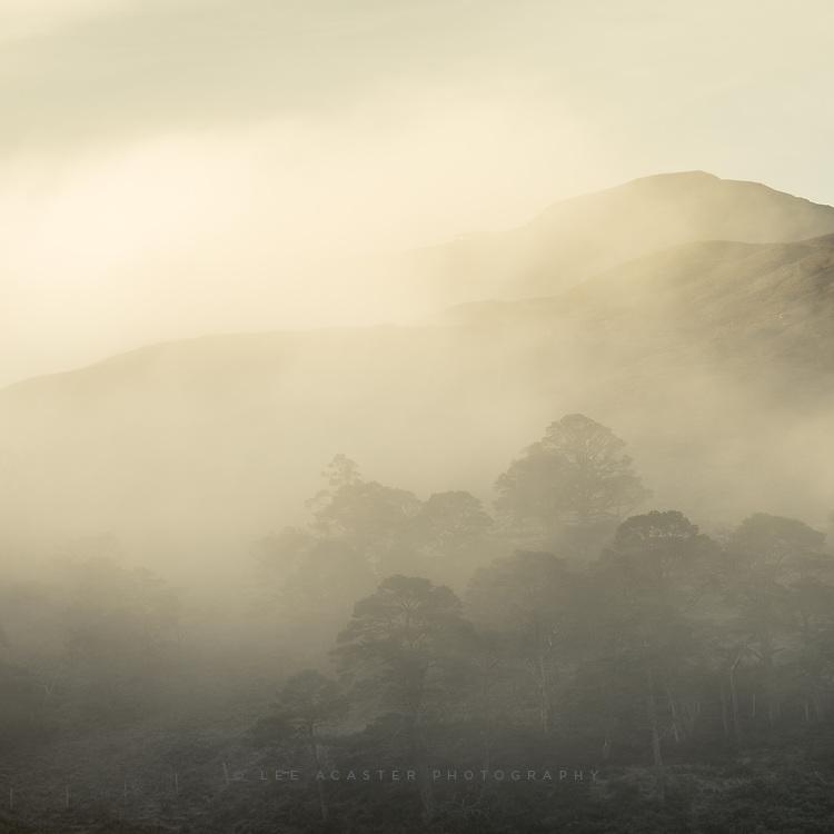 Trees in the mist above Loch Clair, Torridon