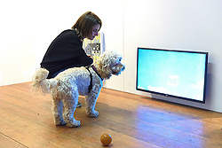 © Licensed to London News Pictures. 20/08/2016. Dog and owner enjoying artwork titled 'Catch' by artist NICK WHITE, a multimedia installation that simulates a frisbee bouncing around a screen designed to captivate dogs.The world's first art exhibition for dogs was created by artist DOMINC WILCOX is part of the MORE THAN's #PlayMore campaign, encouraging owners to spend more time playing with their pets.  London, UK. Photo credit: Ray Tang/LNP