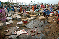 Fishing families  in Nagapattinum district in Tamil Nadu, India  work the early morning fish market as boats bring in their catch September ,2005. The recovery process is slow and the situation still grim for many of the worlds poorest who were most affected by the deadly wave.  (Ami Vitale)