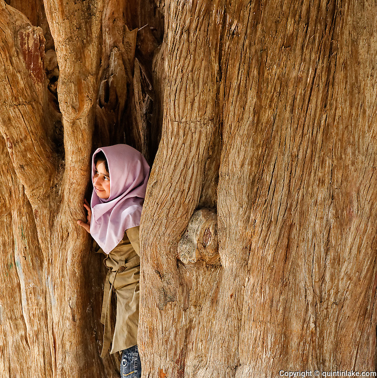 """An Iranian girl looks out from the trunk of Sarv-e Abar-Kuh (Persian: ??? ???????, """"cypress of Abar-Kuh""""), also called the Zoroastrian Sarv, is a Cupressus sempervirens tree in Abarkuh, Yazd Iran. It is estimated to be over four thousand years old and may be the oldest living thing in Asia."""