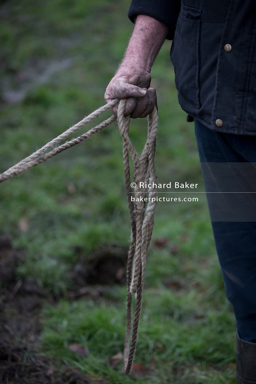 A detail of Irish ploughman Tom Nixon leading Shire horses Nobby and Heath as they plough an on-going heritage wheat-growing area in Ruskin Park, a public green space in the borough of Southwark, on 9th February 2018, in London, England. The Friends of Ruskin Park are again growing heritage wheat and crops together with the Friends of Brixton Windmill and Brockwell Bake Association. Shire horses are descended from the medieval warhorse but are a breed under threat. Operation Centaur, which maintains the last working herd of Shires in London is dedicated to the protection and survival of the breed. It is an organization set up to promote the relevance of the horse as a contemporary working animal in partnership with humans. This takes the form of heritage skills in conservation and agriculture, transportation, discovery, learning and therapy.