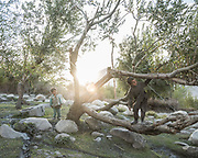 Boys playing in trees. <br /> The traditional life of the Wakhi people, in the Wakhan corridor, amongst the Pamir mountains.