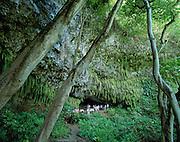 Fern Grotto, Wailua River, Kauai, Hawaii, USA<br />