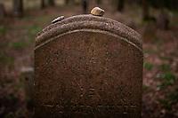 Knyszyn, woj. podlaskie, 26.04.2020. XVIII-wieczny cmentarz zydowski na groblach krolewskich sadzawek wchodzacych w sklad zalozenia dworskiego Zygmunta II Augusta. Jeden z najwiekszych i najlepiej zachowany kirkut w wojewodztwie podlaskim N/z macewy na cmentarzu fot Michal Kosc / AGENCJA WSCHOD