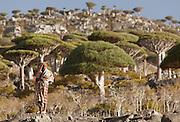 Local man in the Dragon Blood Tree Forest, Dixsam, Socotra, Yemen