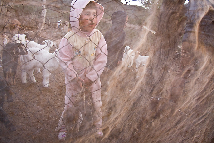 Children help with the management and milking of the family goat herd in San Francisco de la Sierra, Baja California Sur, Mexico on January 27, 2009. Making goat cheese is the primary activity and source of income for the ranches in the area.