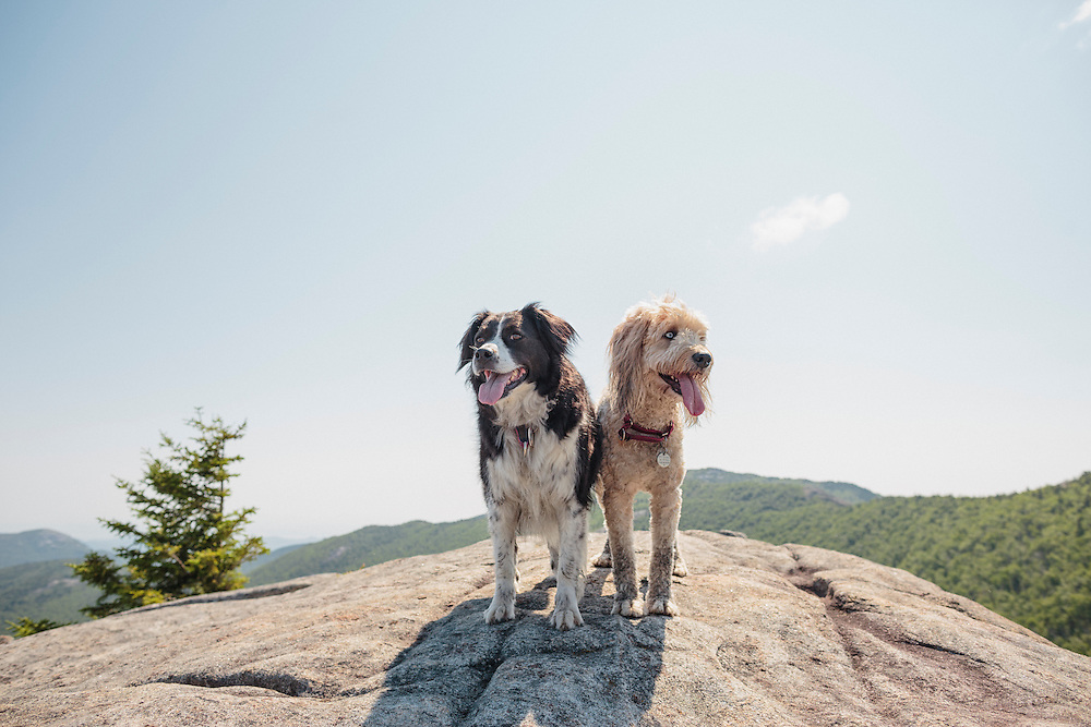 Two dogs standing on a mountain top