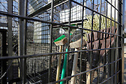 various brushes and brooms inside an animal cage enclosure