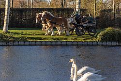 Palm paarden in actie, Jambon Bert, BEL<br /> Stoeterij Diepensteyn - Steenhuffel  2020<br /> © Hippo Foto - Dirk Caremans<br /> 18/11/2020