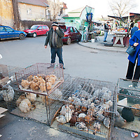 TIMISOARA, ROMANIA - APRIL 21:  A farmer and a customer look at live chickens at the daily market on April 21, 2013 in Timisoara, Romania.  Romania has abandoned a target deadline of 2015 to switch to the single European currency and will now submit to the European Commission a programme on progress towards the adoption of the Euro, which for the first time will not have a target date. (Photo by Marco Secchi/Getty Images)