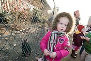 """Nederland, Herpen, 20090128...Kinderopvang 'Op de boerderij' in Herpen...""""OP DE BOERDERIJ"""" kinderopvang..is gevestigd bij een vleesveebedrijf te Herpen...De kippen worden gevoerd....Netherlands, Herpen, 20090128. ..Childcare on the farm in Herpen. ..""""ON THE FARM"""" childcare ..is located at a beef farm in Herpen...the chickens are being fed.    .."""