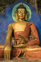"""Swayambhunath Temple is also known affectionately as """"Monkey Temple"""" for the hundreds of monkeys who inhabit the area and playfully jump around the Buddha, stairways and temple buildings."""
