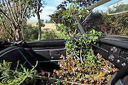 MG sports car with plants inside