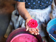 Candlemaker Dona Viviana holding a wax flower in the Zapotec village of Teotitlan del Valle, Oaxaca, Mexico on 27 November 2018